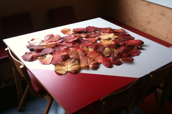 Dan's leaf collection on a table in the kitchen