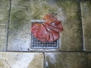Leaf on the drain, front courtyard